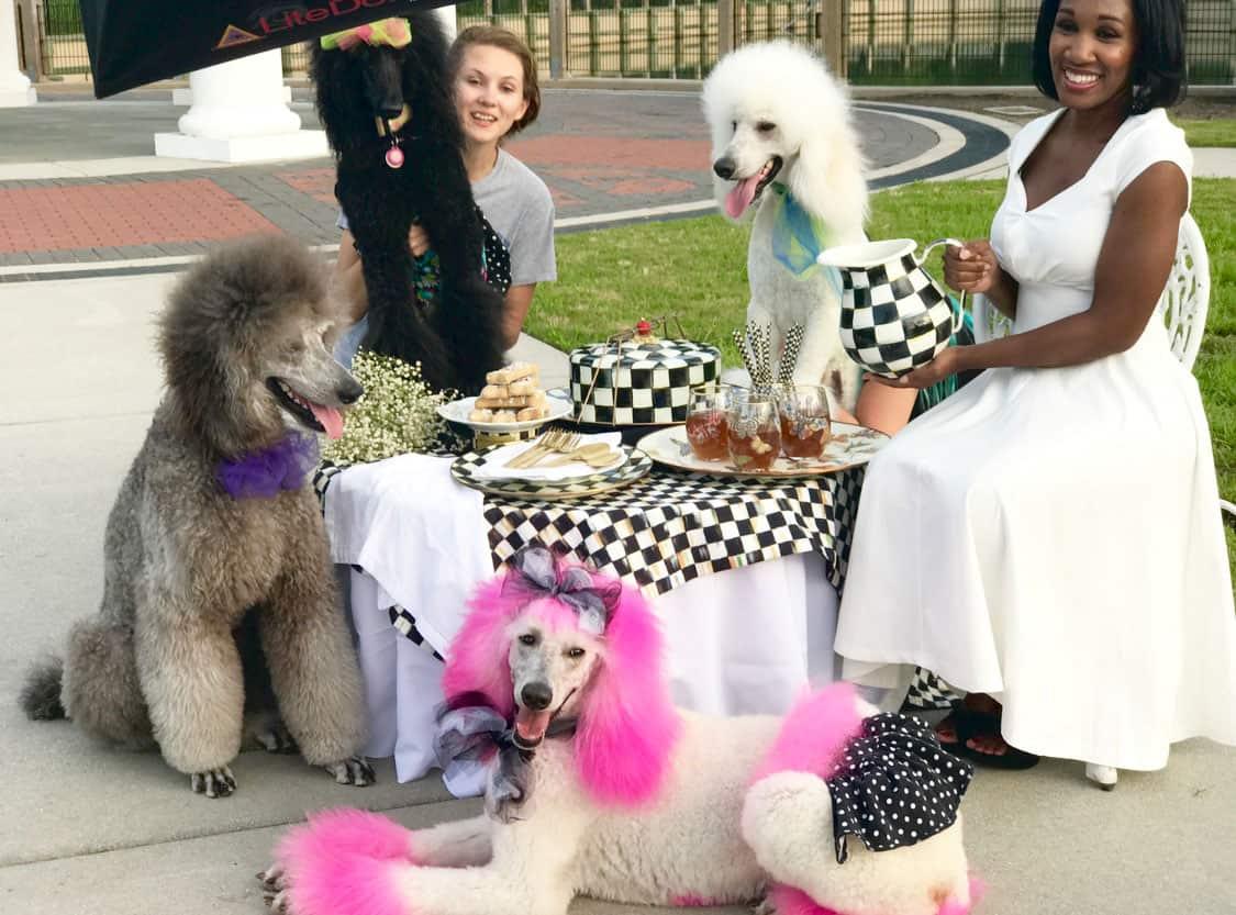 Shaunda Necole My 2017 Blogger Bloopers Poodle Party!