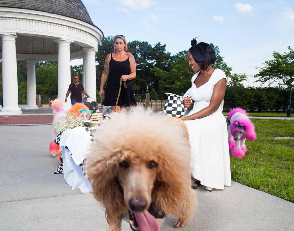 shaunda necole poodle parade