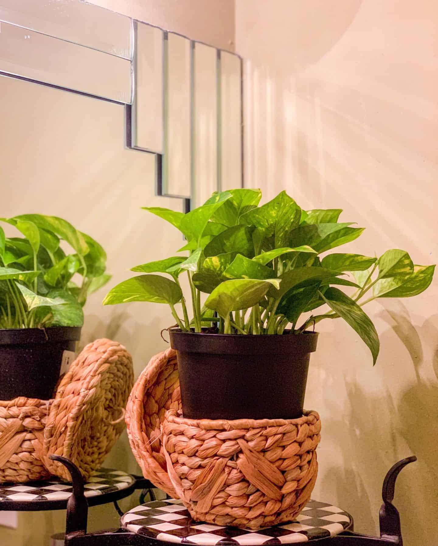 Shaunda Necole- Bohemian plants in the bathroom
