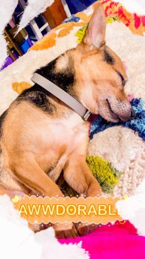 ShaundaNecole.com –Prince George sleep on my MacKenzie-Childs rug!