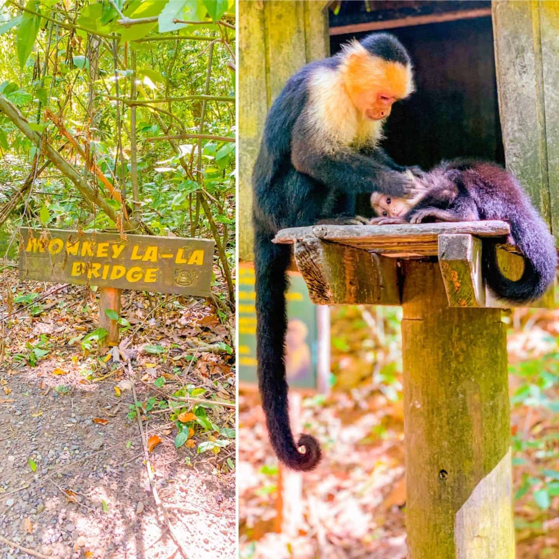 Shaunda Necole- Monkey La-La Bridge in Honduras- Gumbalimba Park