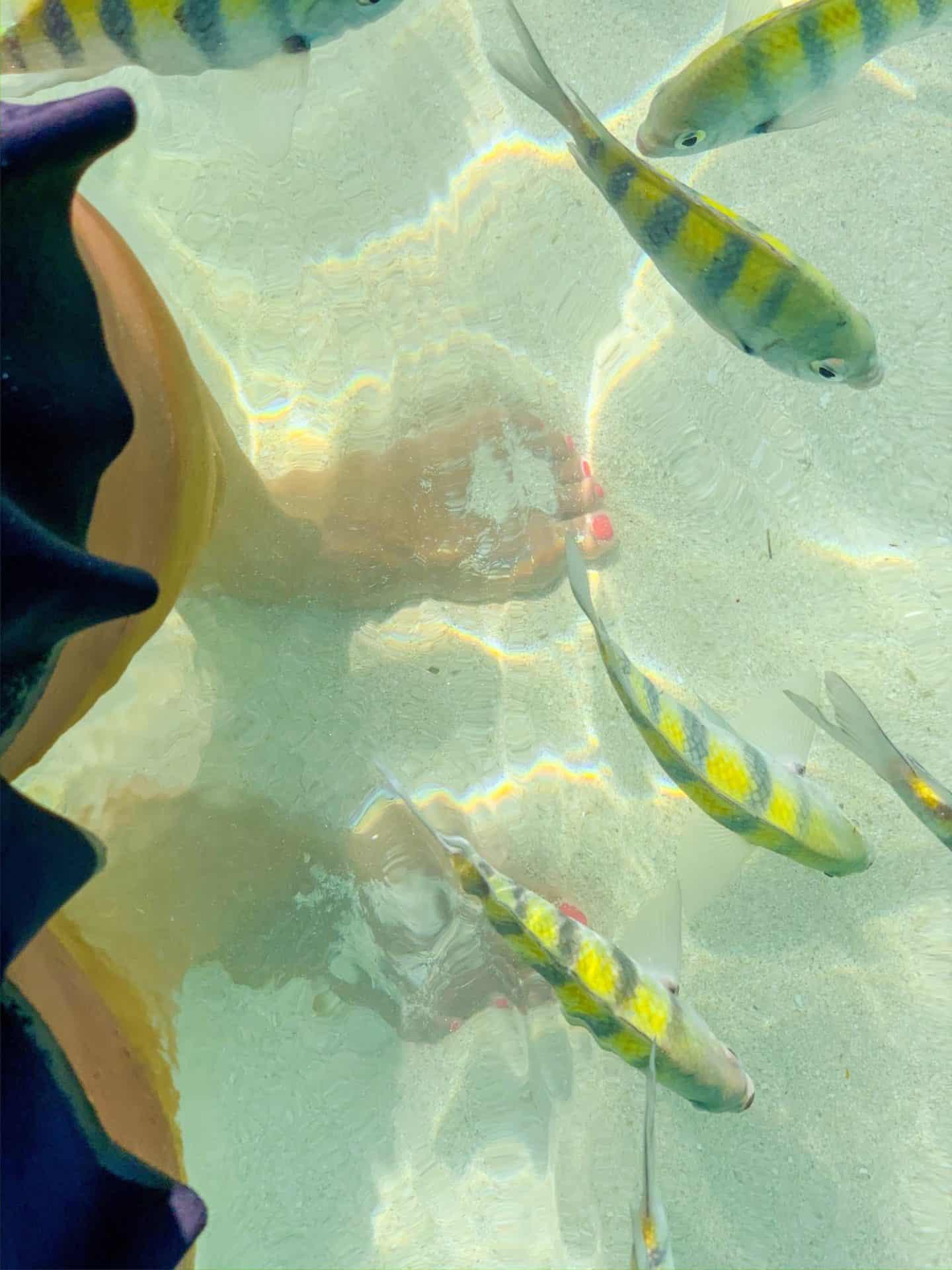 Shaunda Necole- Clear waters with tropical fish swimming around your feet at Isla Roatan beaches in Honduras