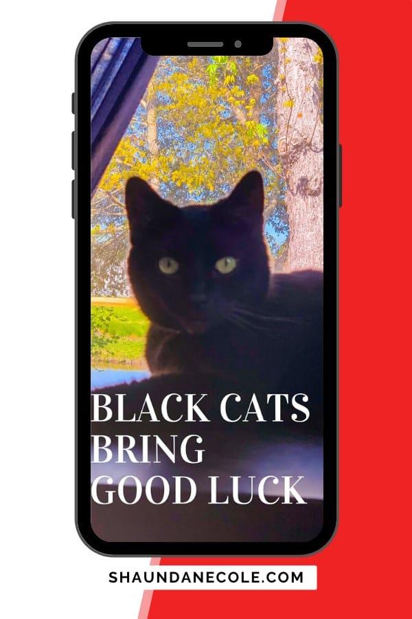 Black Cats Bring Good Luck: Free iPhone Wallpaper
