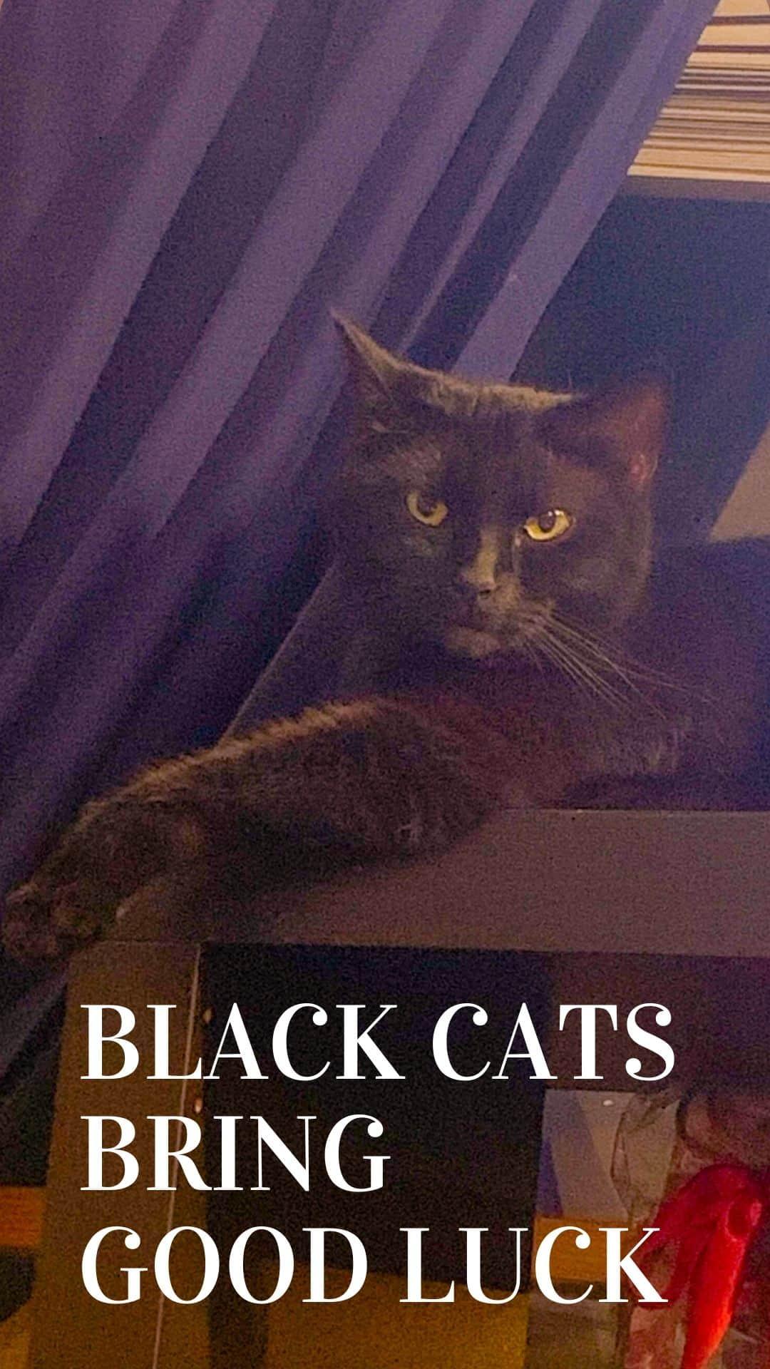 black cat on bookshelf