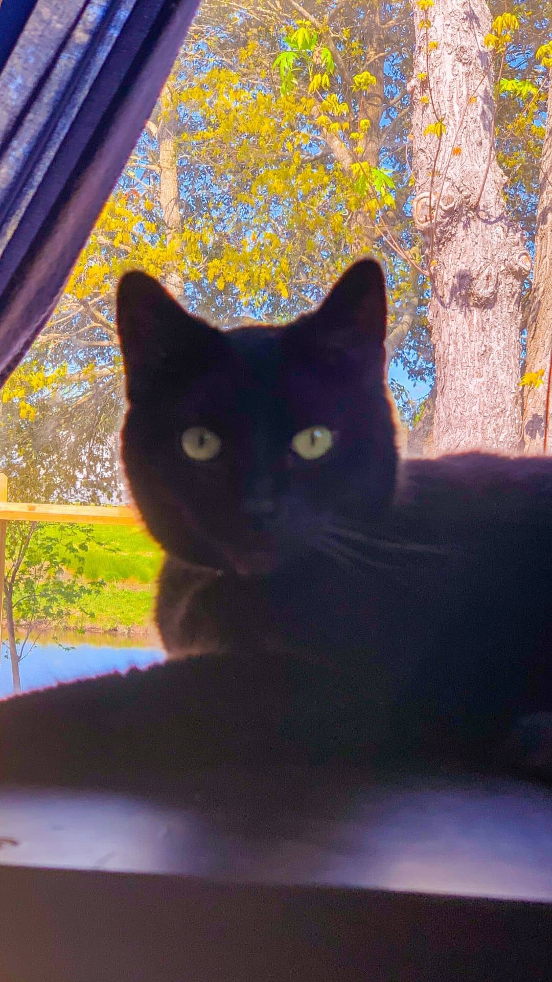 black cats at the window