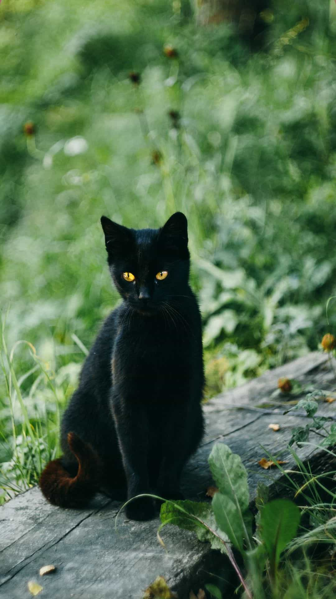 iPhone Black Cat in the grass Wallpaper