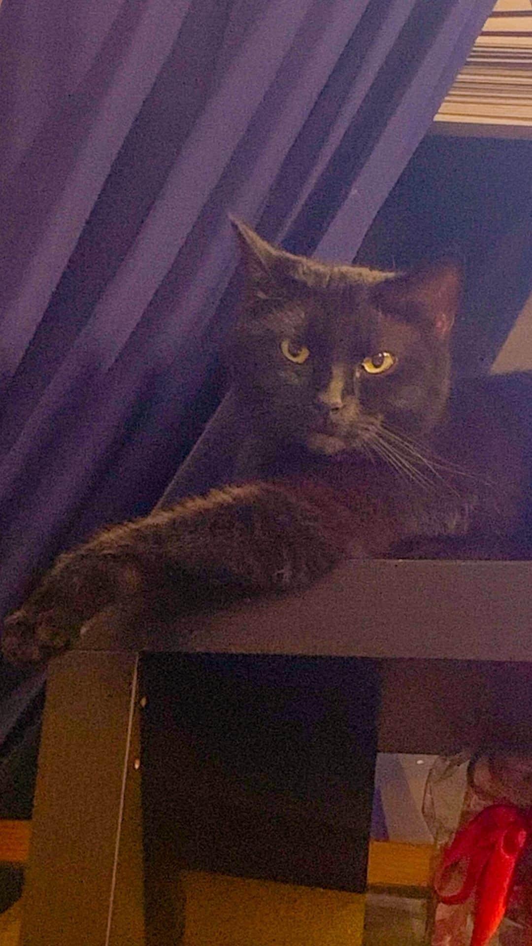 cat on bookshelf