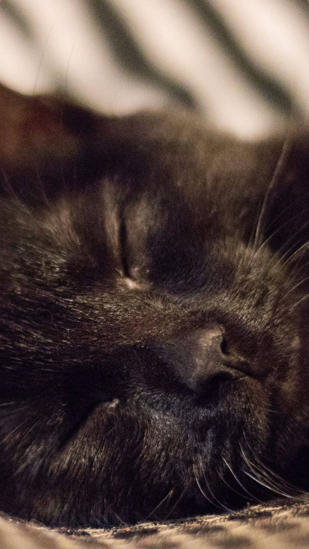 blacks cat sleeping