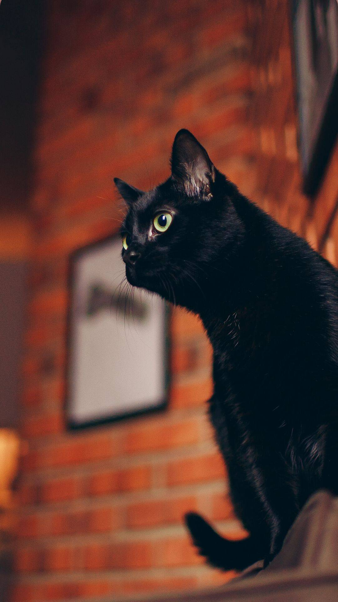 black cat in front of bricks