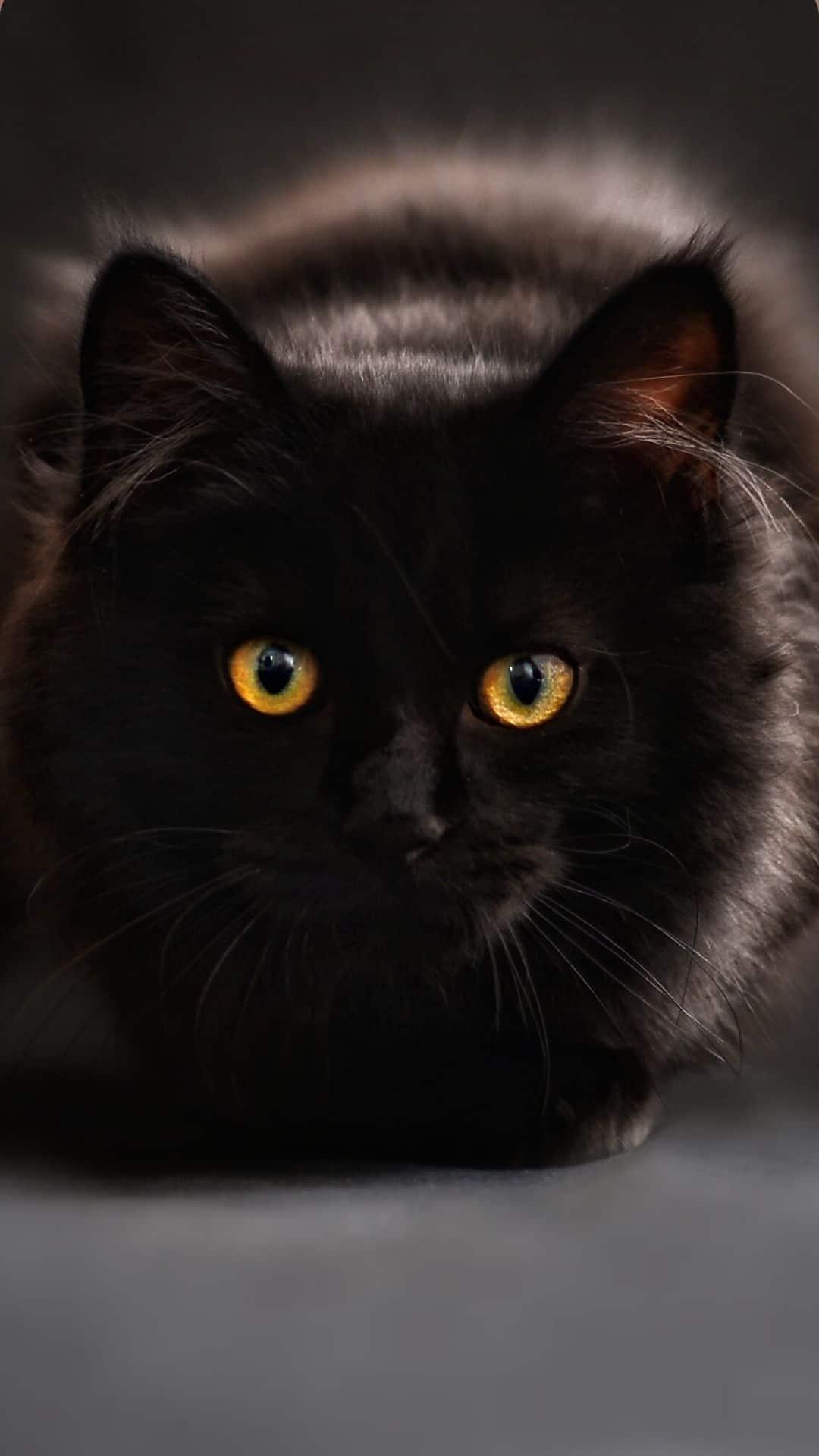 iPhone Black Cat Wallpaper stare