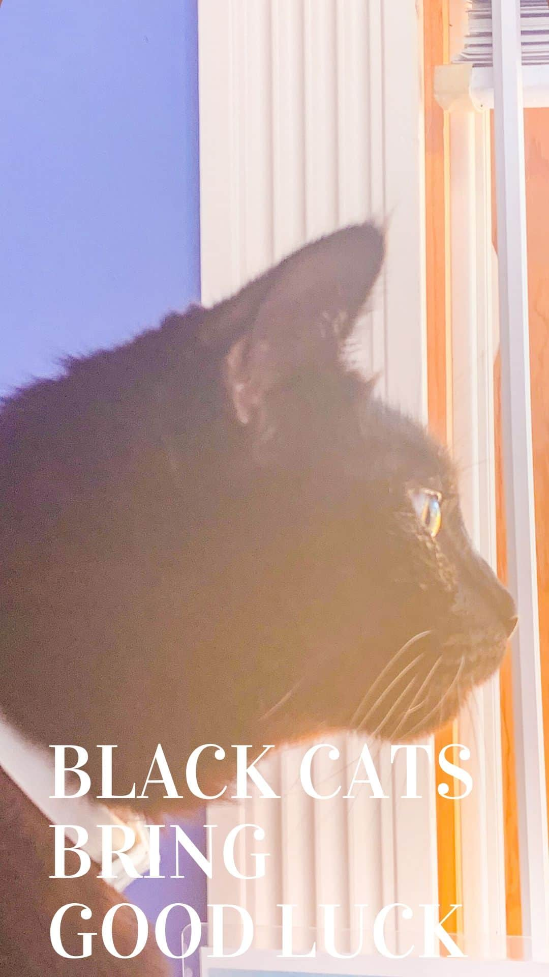 black cat silhouette at window
