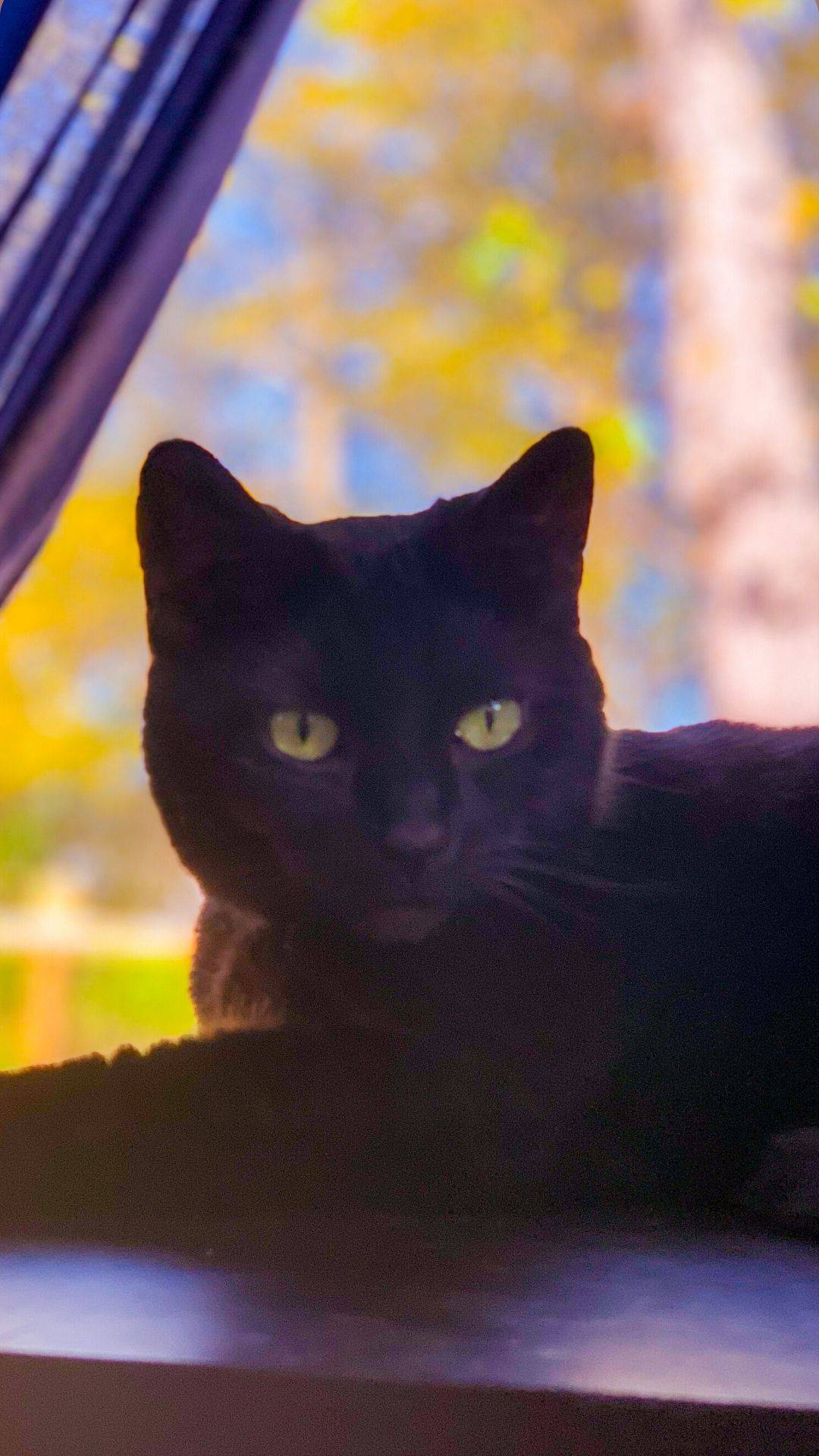 cat window scene