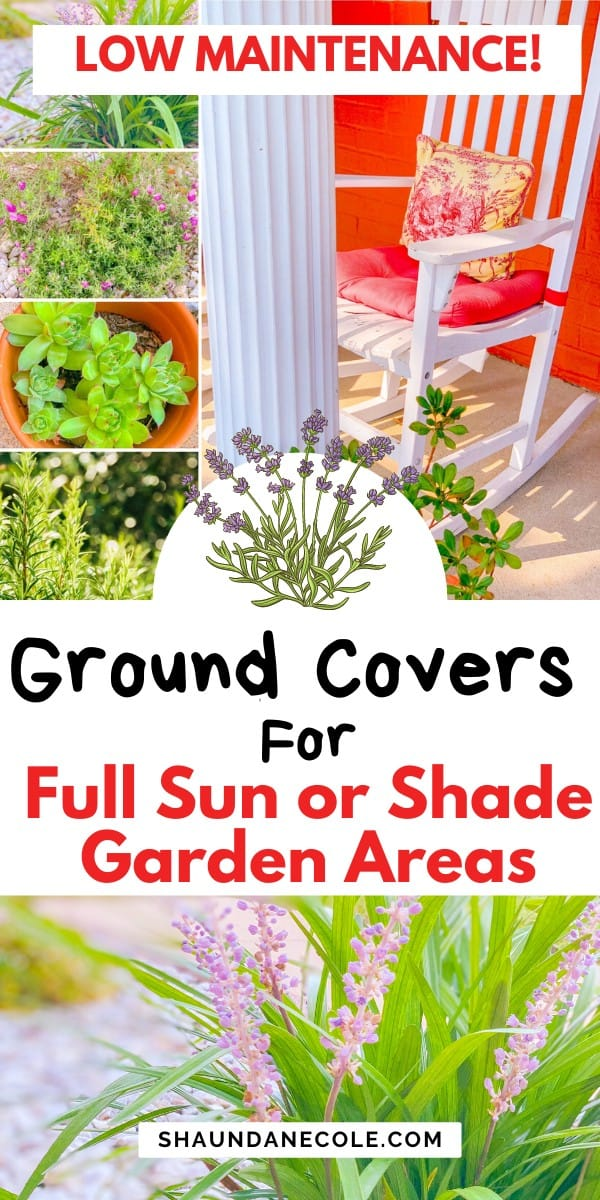 Best Ground Covers For Full Sun Or Shade Garden Areas