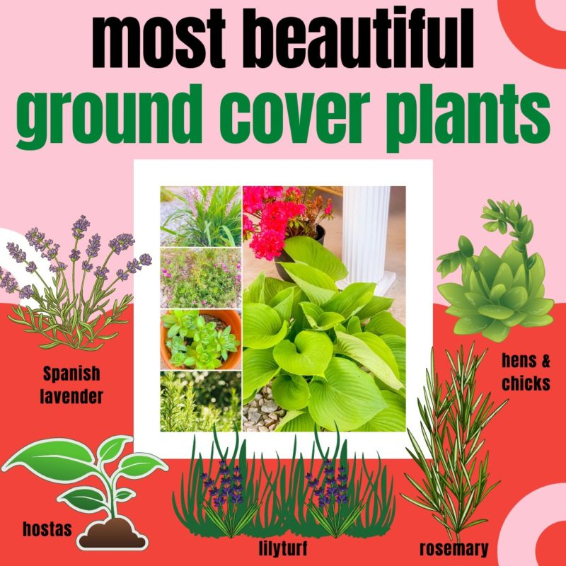 Full Sun Or Shade Ground Cover Plants