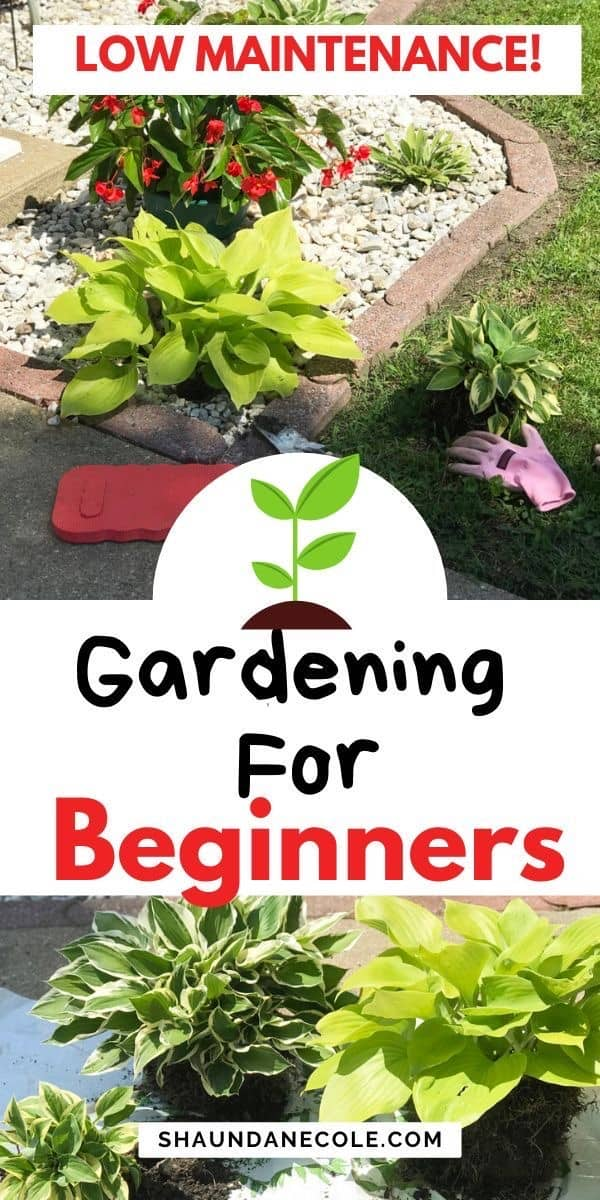 Landscape, Ground Cover And Gardening For Beginners