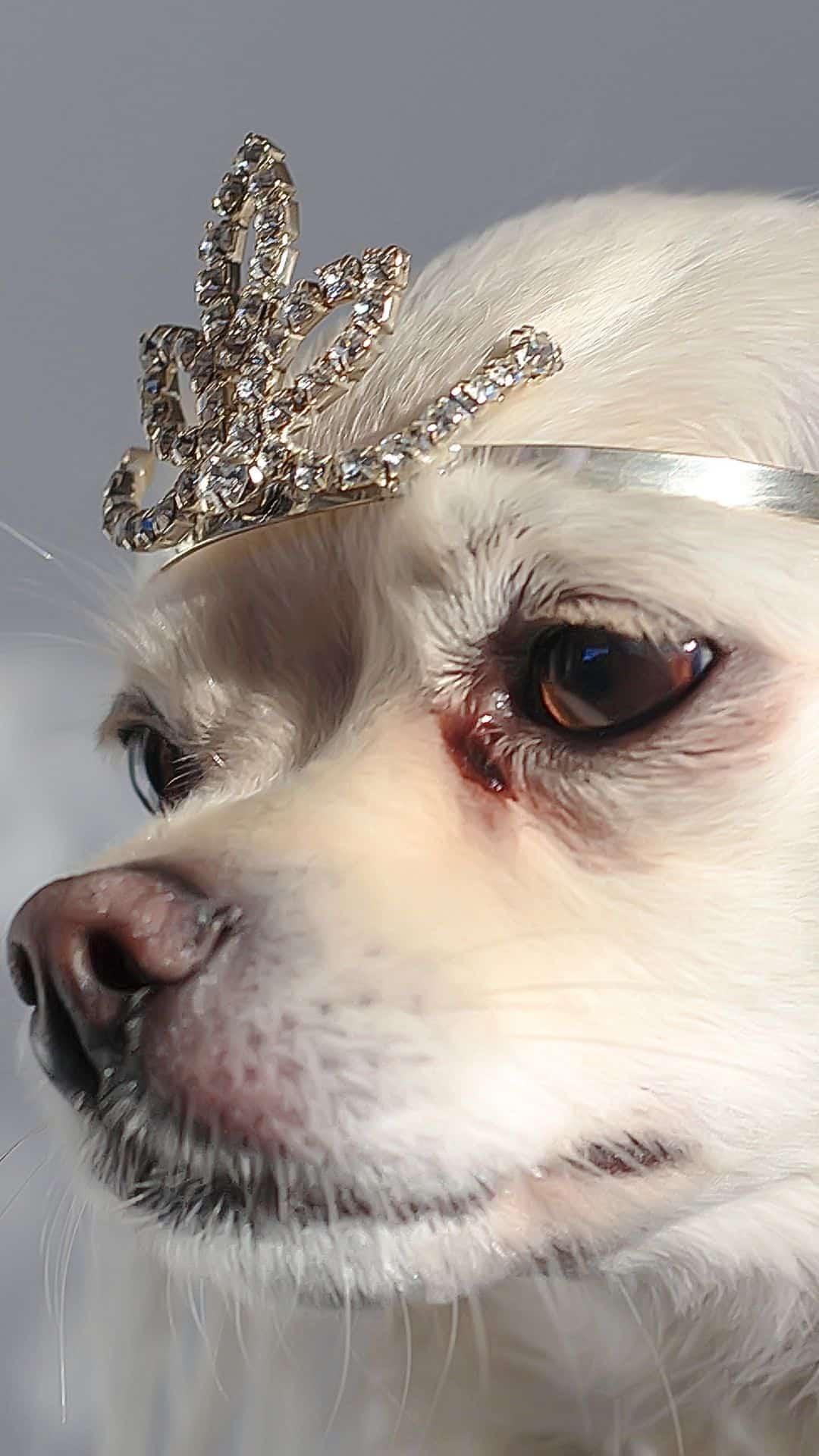 Chihuahua Tiara