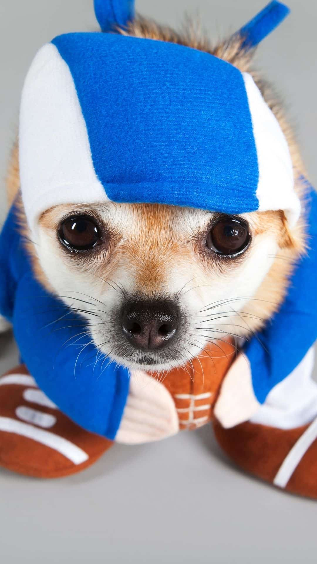 Football Player Chihuahua Costume