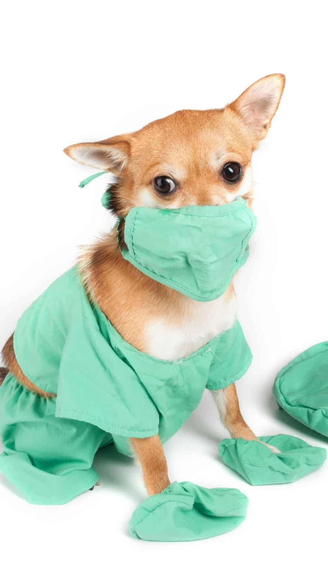 Small Dog Doctor Halloween Costumes