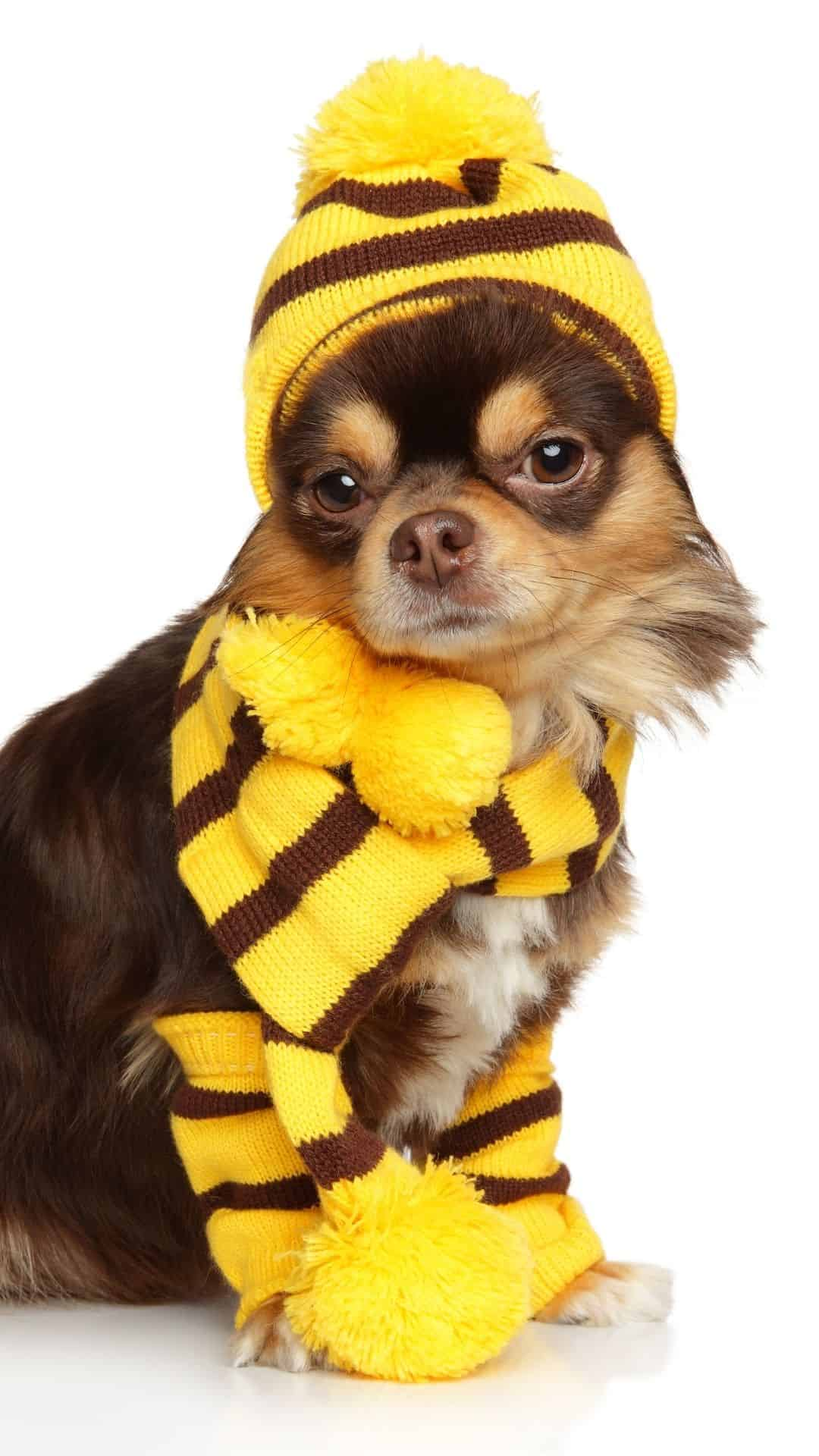 Small Dogs Bee Costume