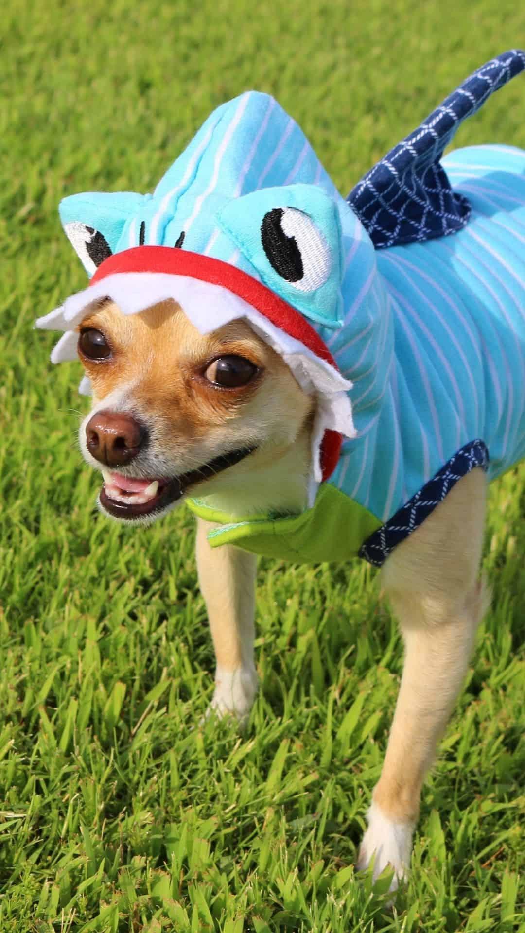 Small Dogs Shark Halloween Costumes