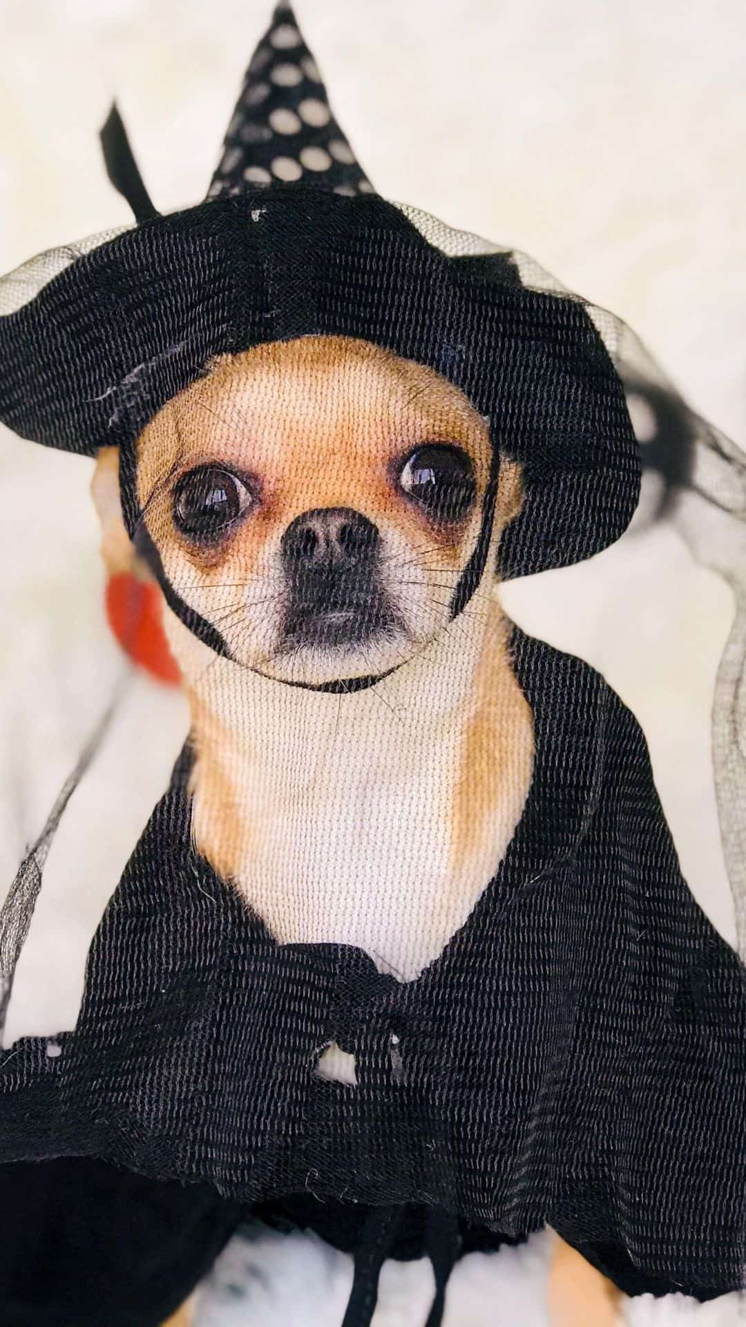 Small Dogs Witch Costume