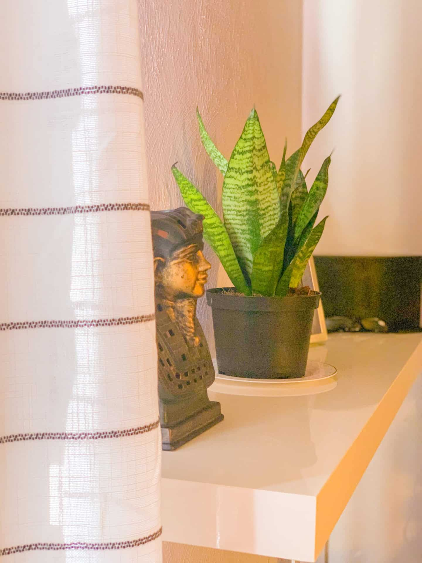 How To Decorate your Room w/ Boho Snake Plant Ideas
