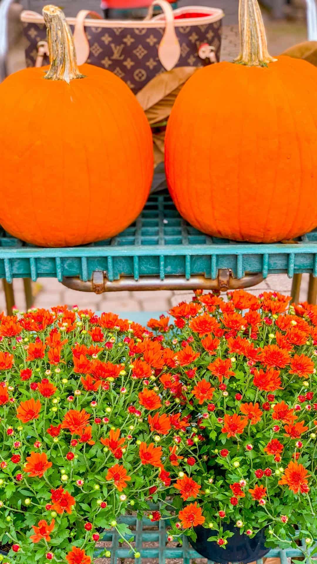Autumn Wallpaper iPhone Aesthetic Mums