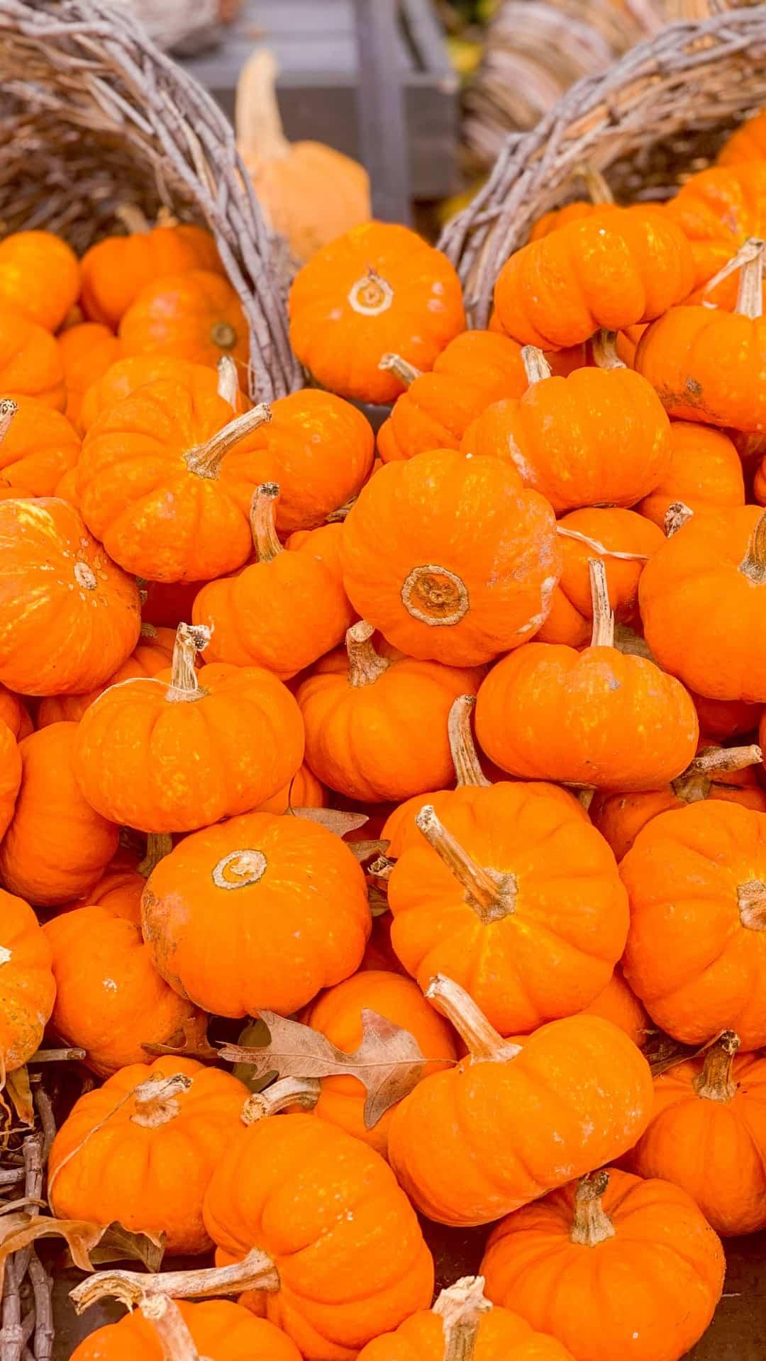 Autumn Wallpaper iPhone Aesthetic Pumpkin Cornucopias