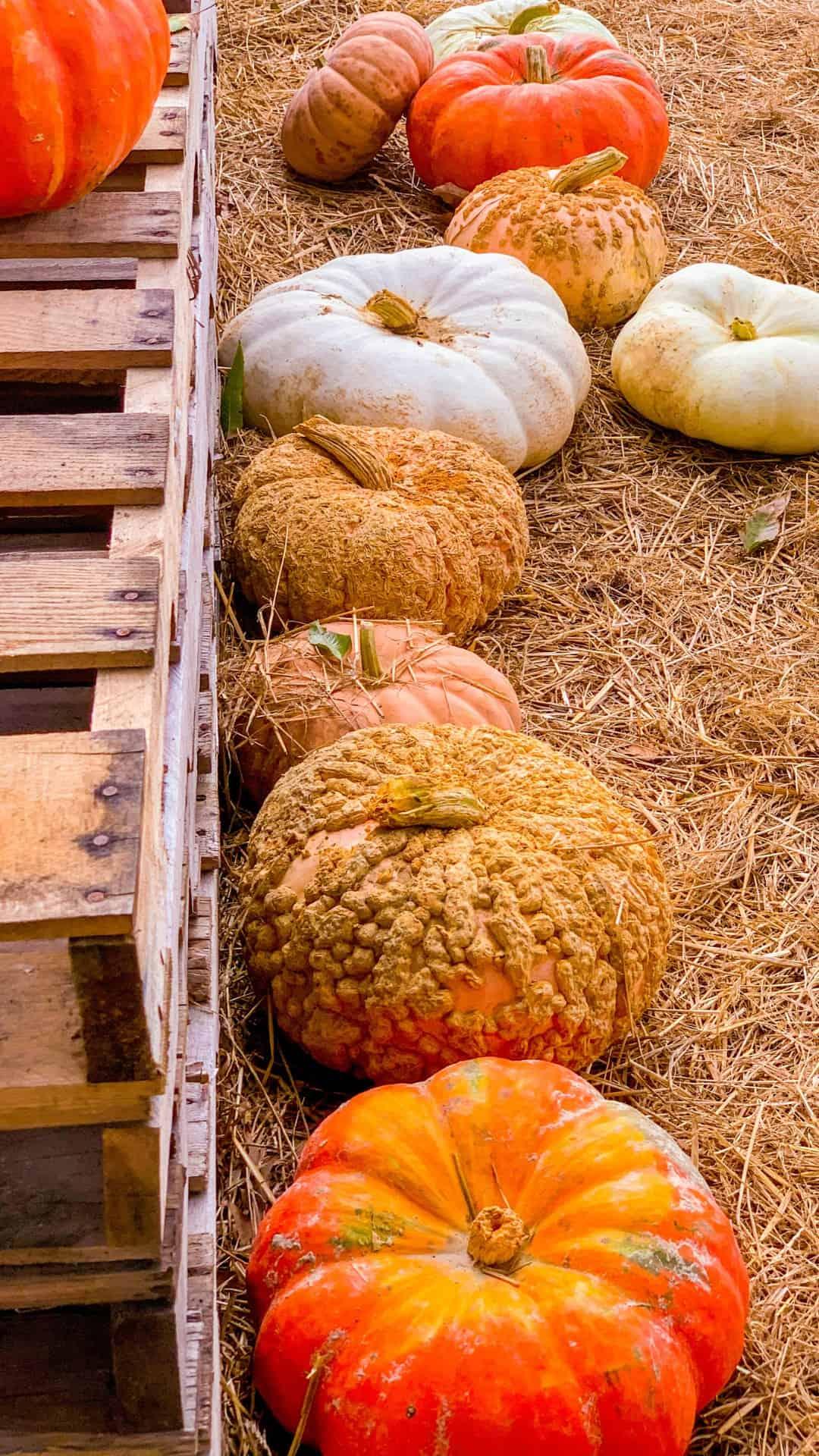 Autumn Wallpaper iPhone Aesthetic Fall Pumpkins