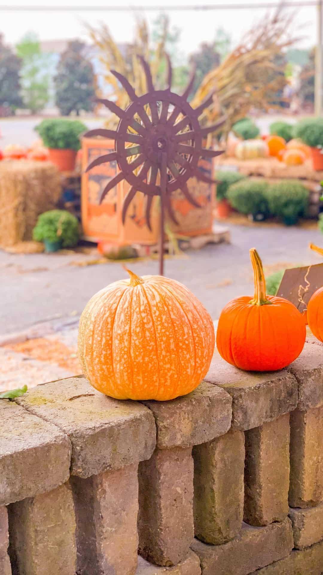 Autumn Wallpaper iPhone Aesthetic Fall On The Farm