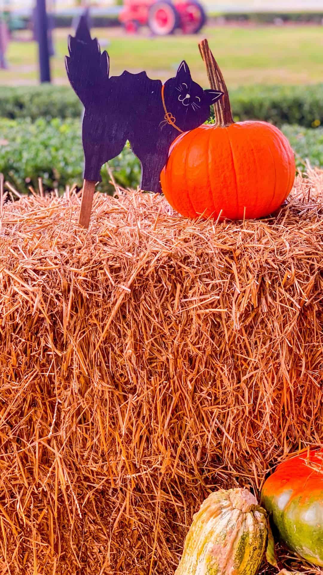 Autumn Wallpaper iPhone Aesthetic Bales of Hay