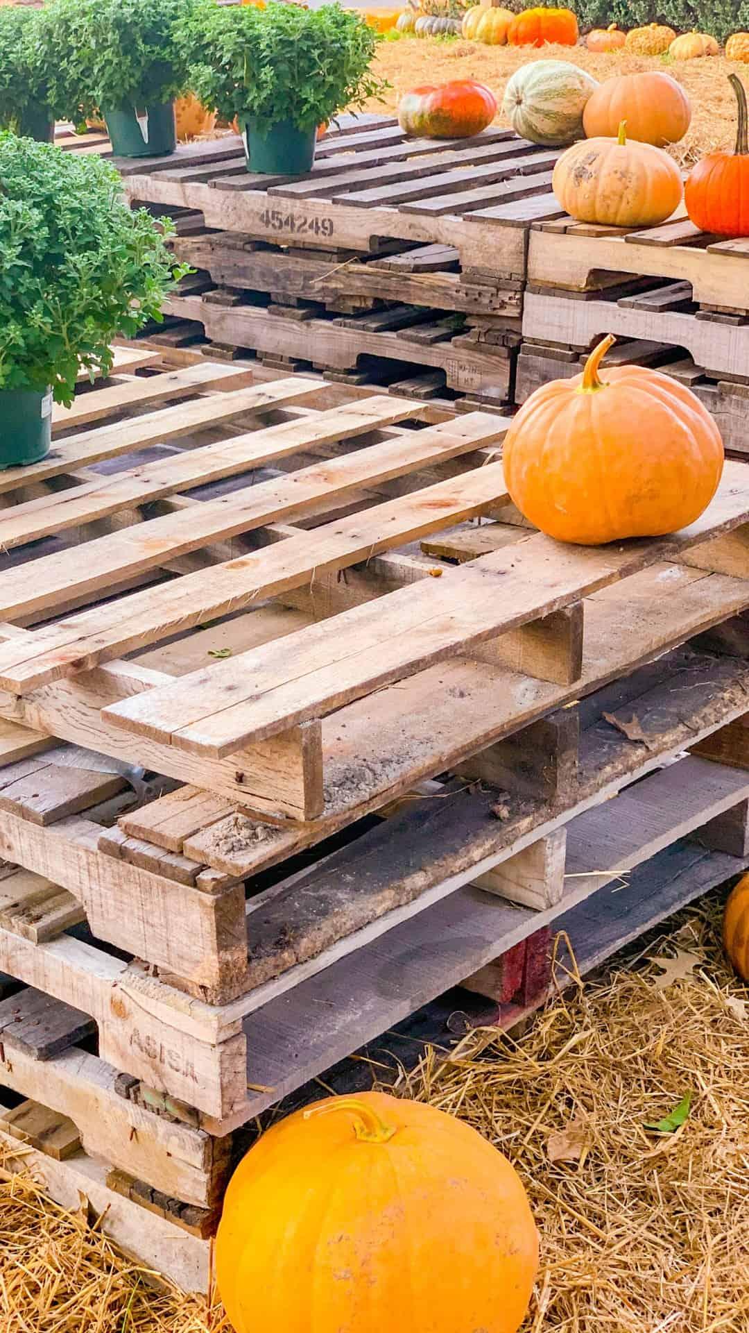 Fall Wallpaper iPhone Pumpkin Pallet Aesthetic