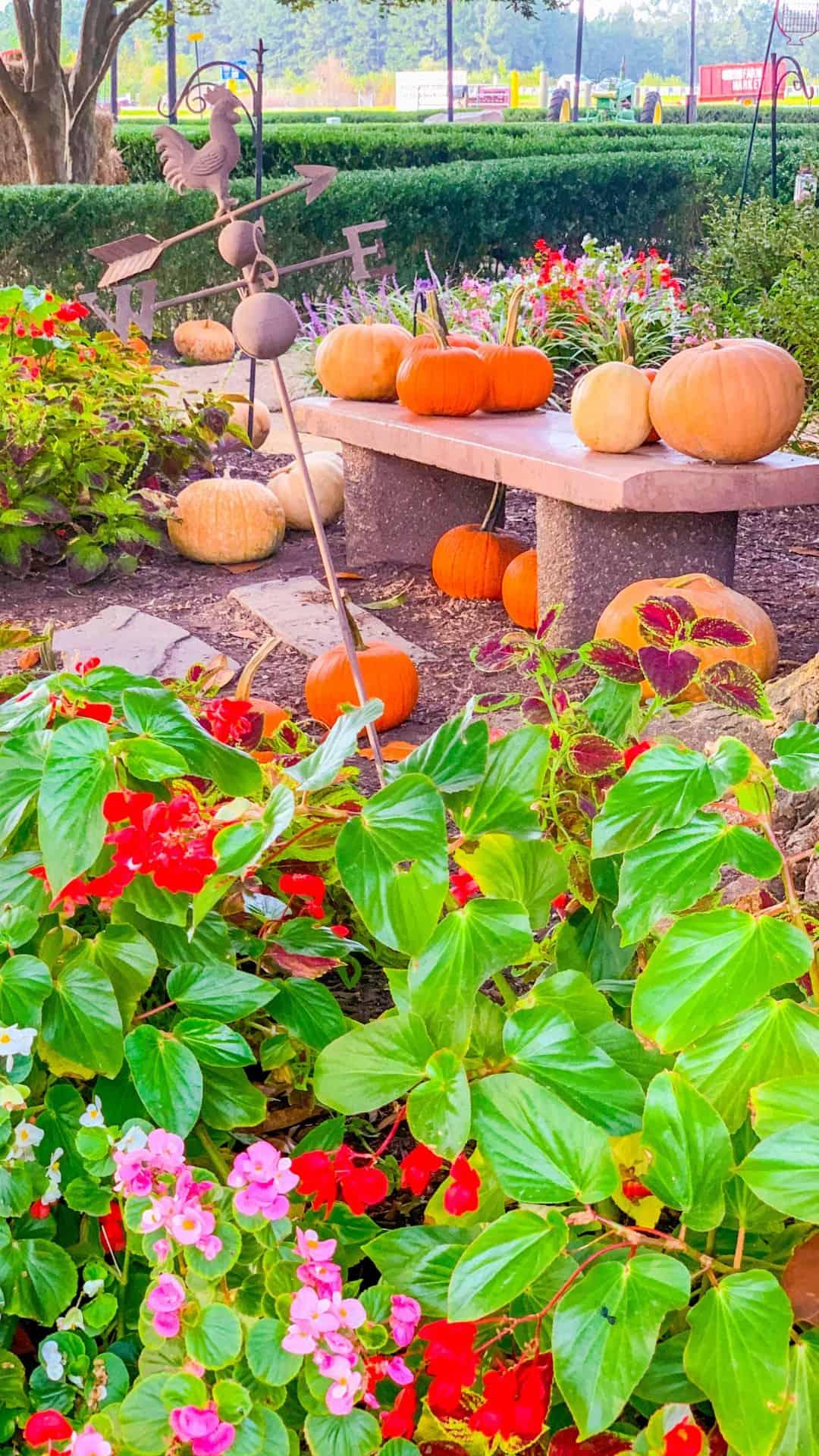 Fall Wallpaper iPhone Pumpkin Patch & Flower Garden Aesthetic