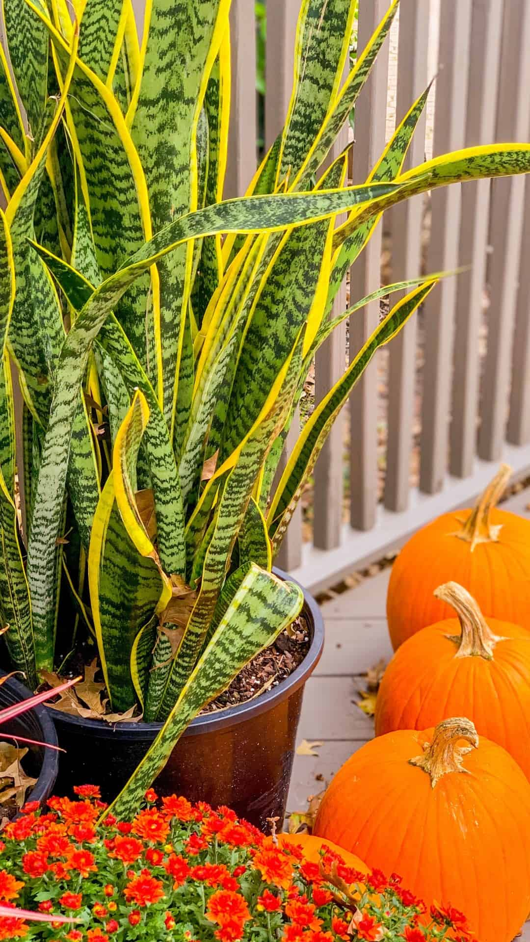 Autumn Wallpaper iPhone Aesthetic Snake Plants