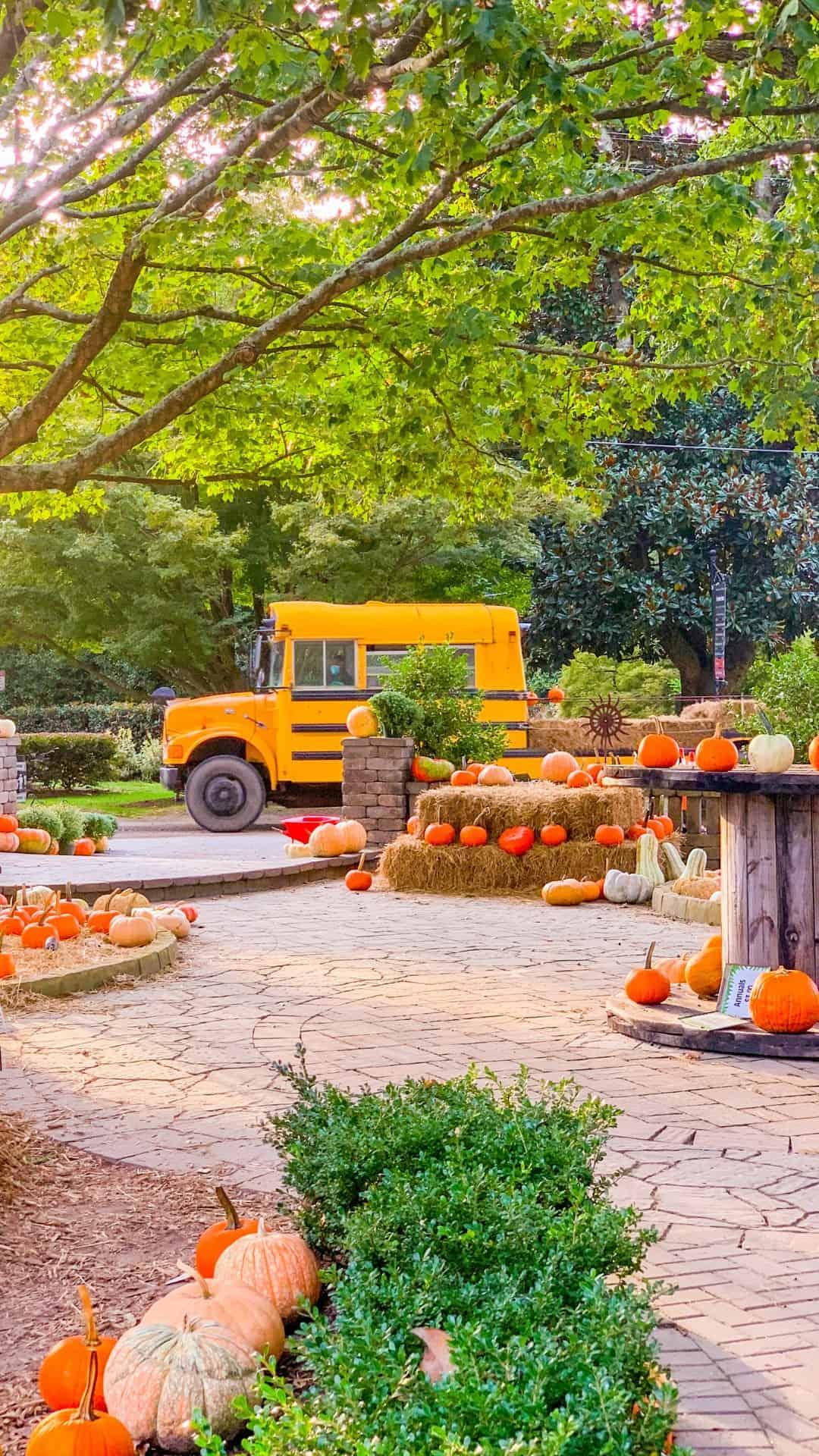 Fall Wallpaper iPhone Pumpkin Patch & Hayride