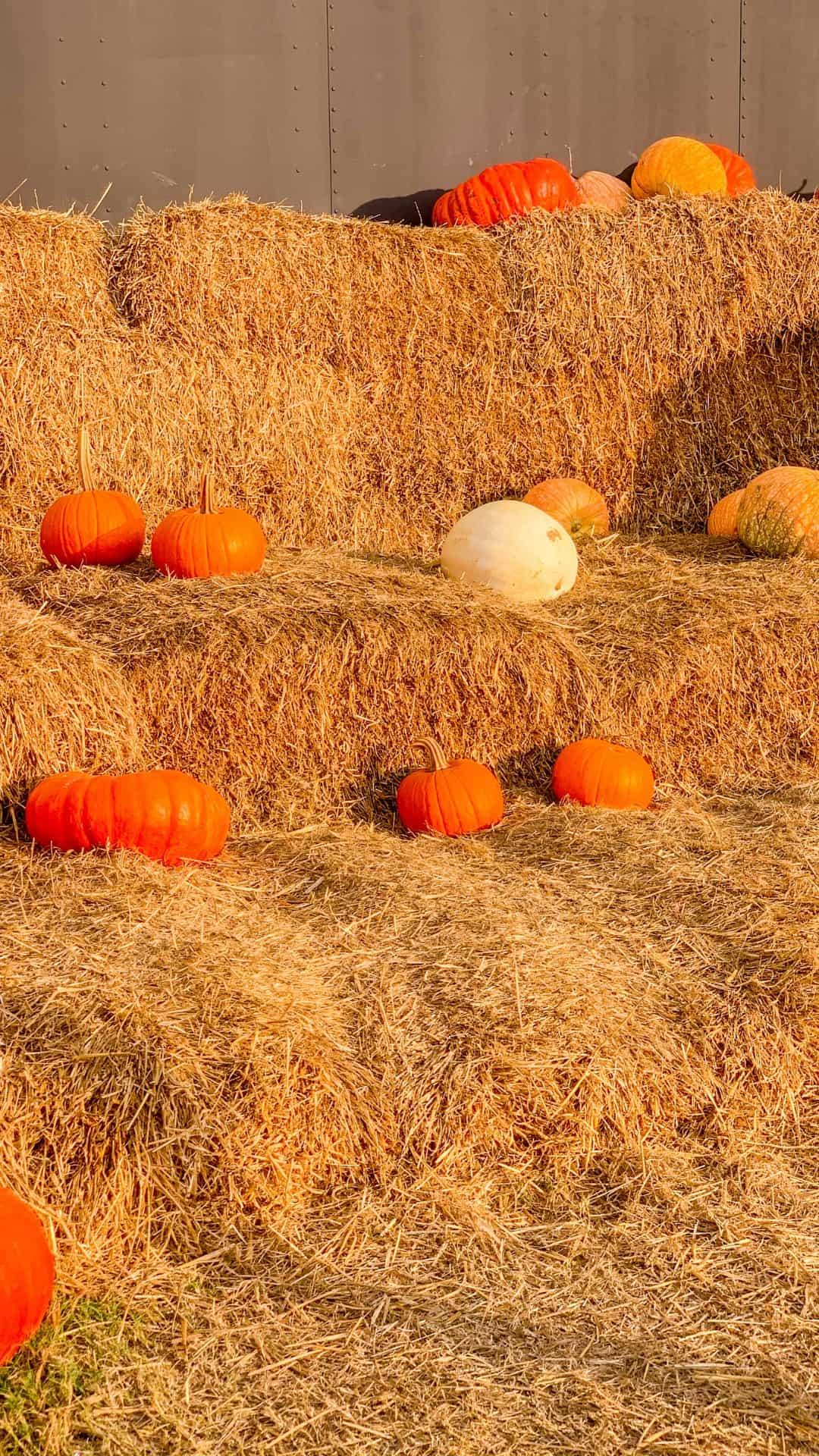 Fall iPhone Wallpaper Bales Of Hay