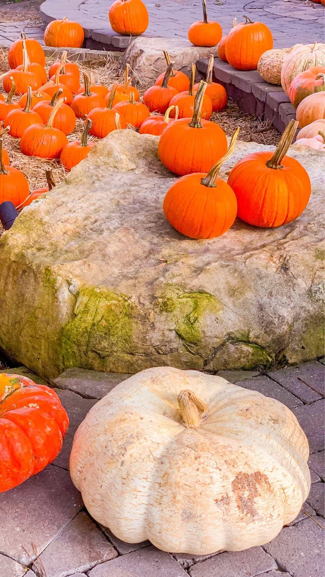 Fall iPhone Wallpaper Pumpkin Aesthetic