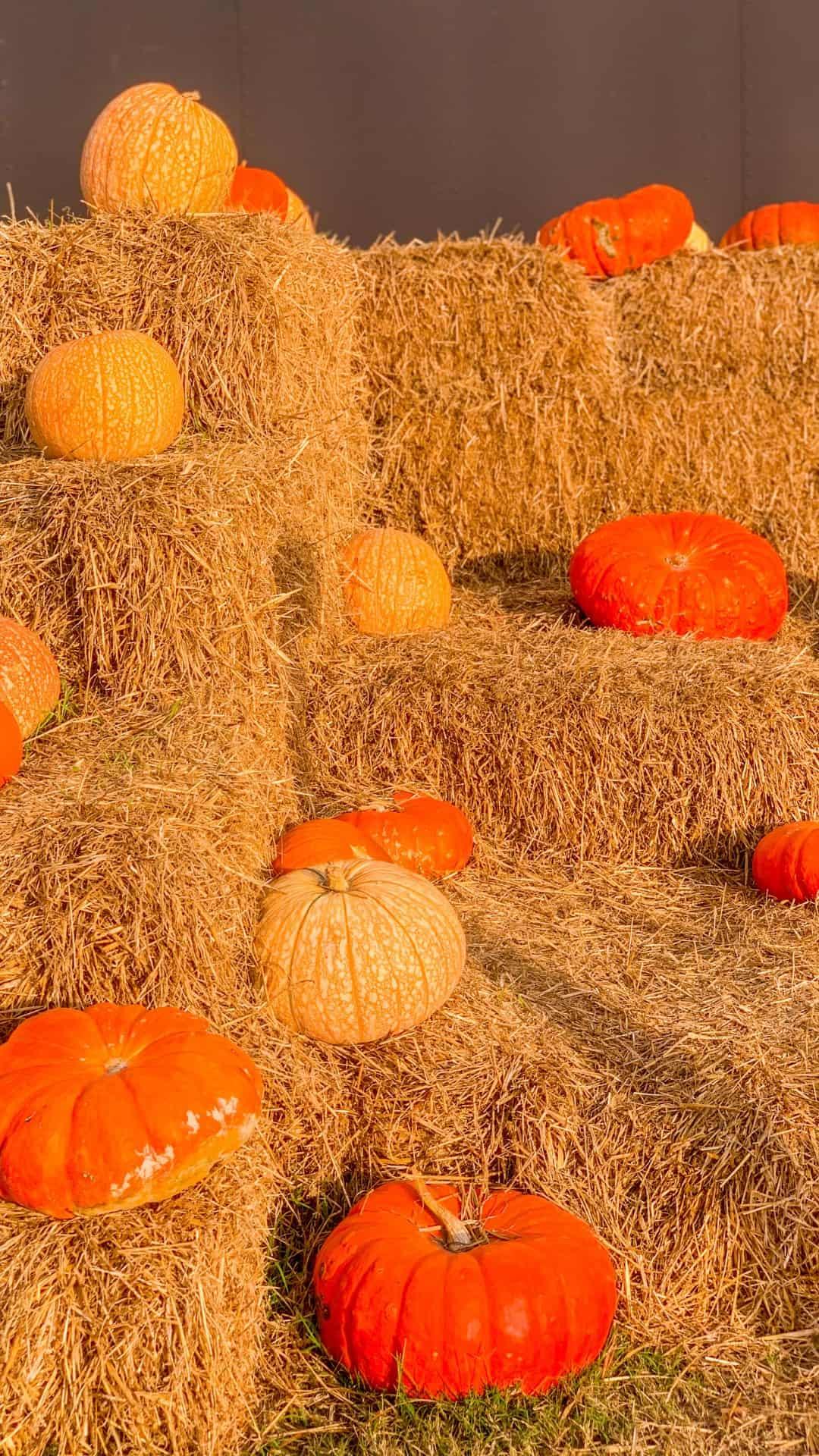 Fall iPhone Wallpaper Aesthetic Hay Bales