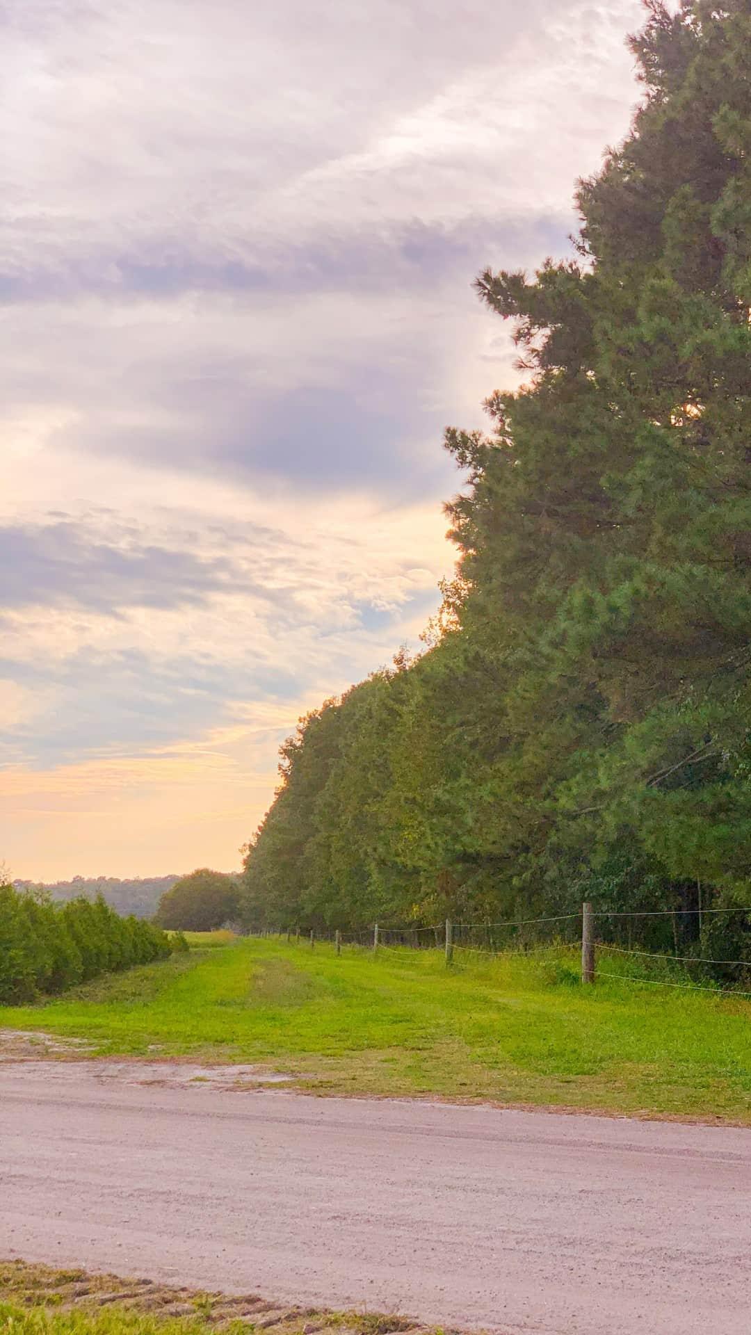 Fall iPhone Wallpaper Aesthetic Farm Roads