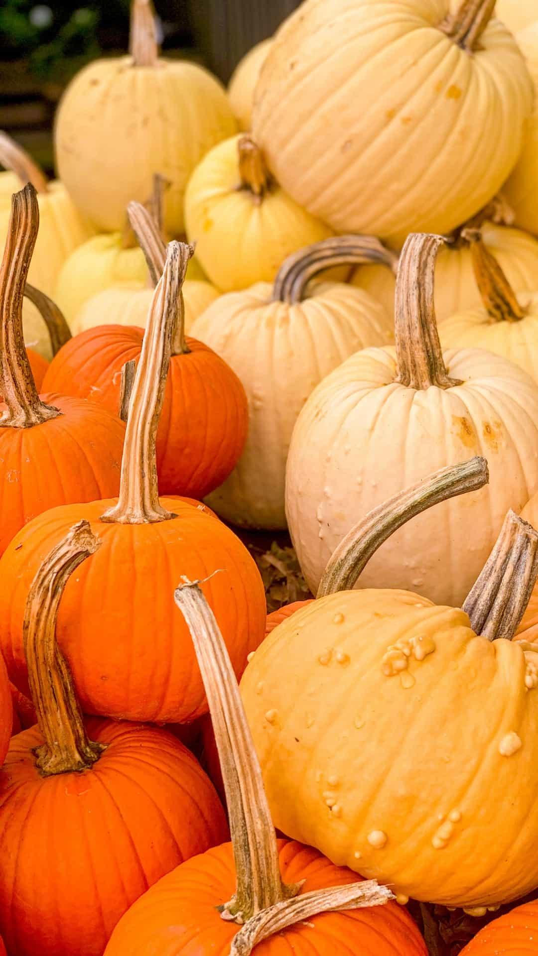 Autumn Wallpaper iPhone Aesthetic Pumpkin Patch