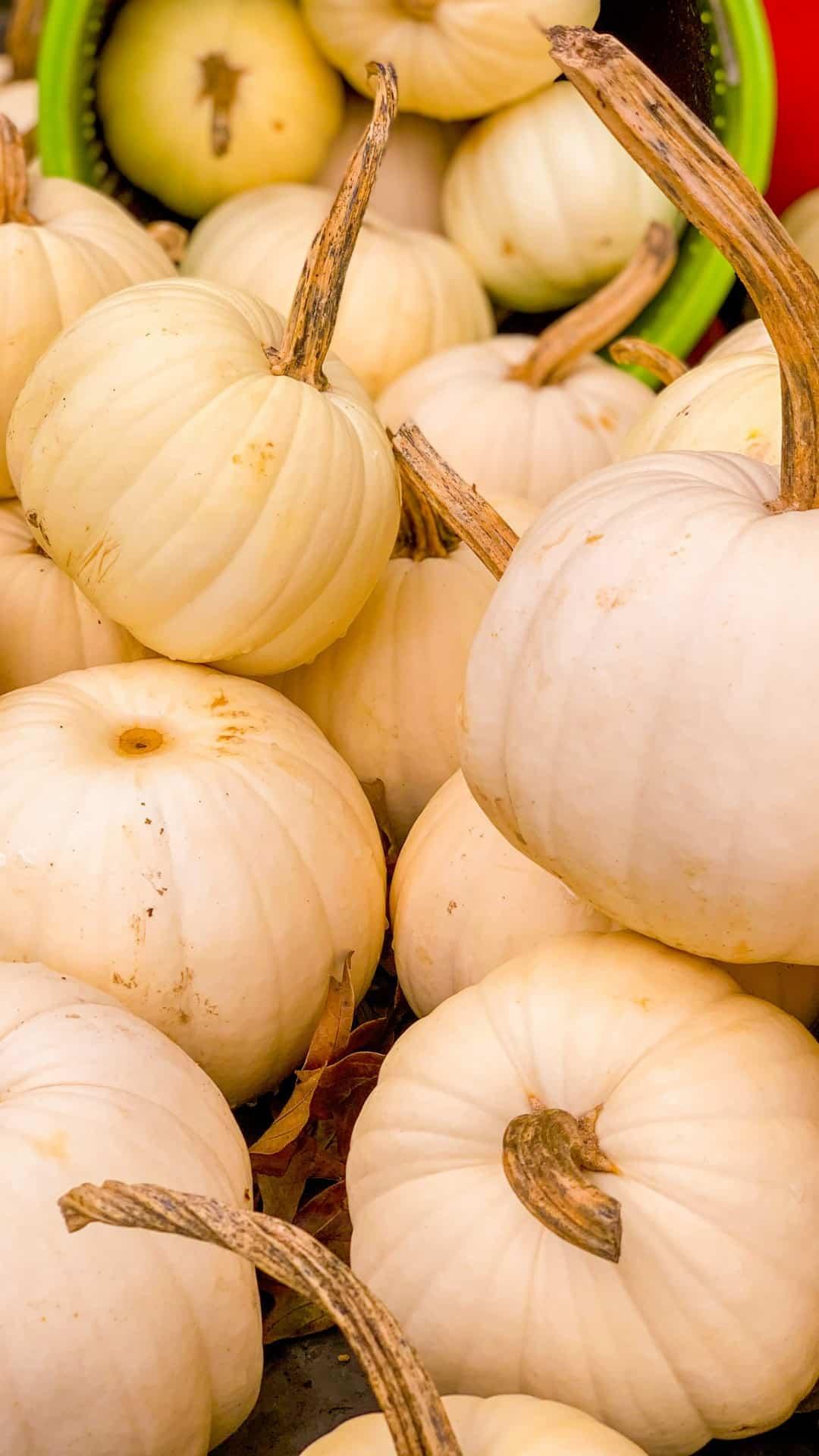 Autumn Wallpaper iPhone Aesthetic White Pumpkins