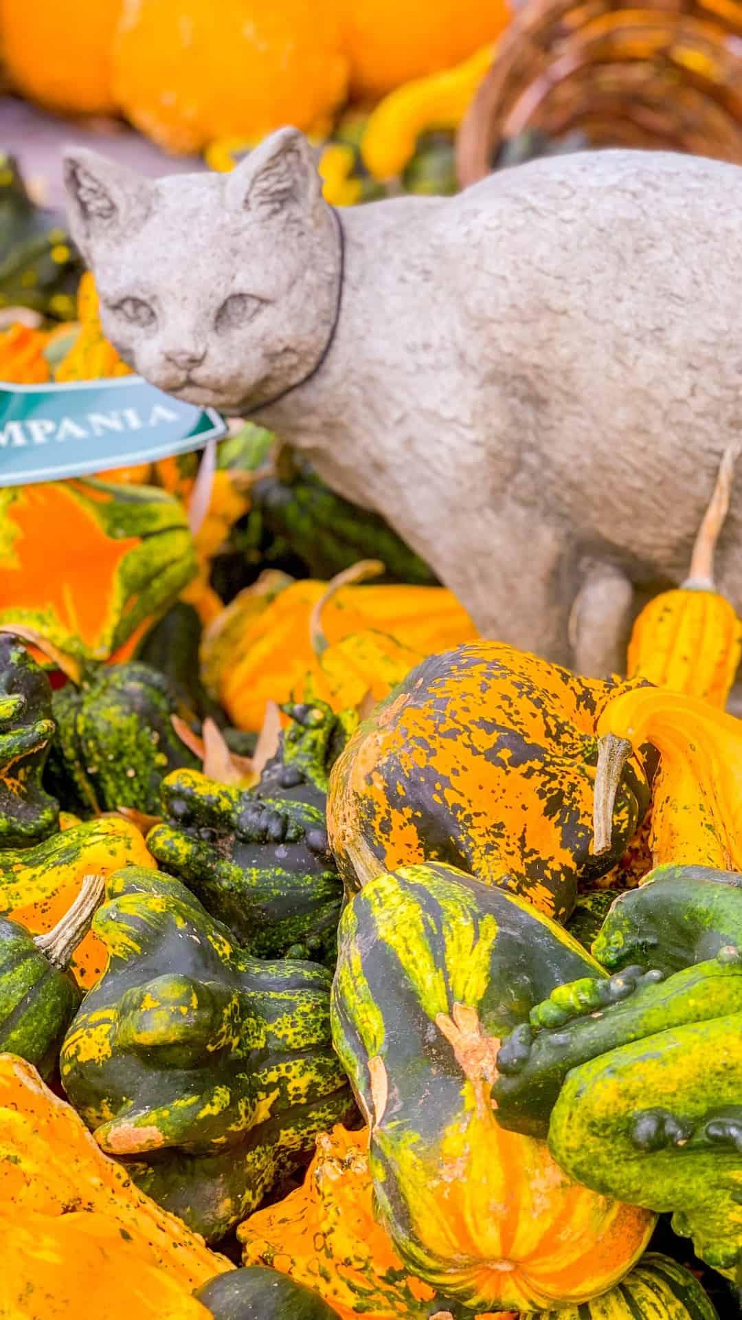Autumn Wallpaper iPhone Aesthetic Halloween Cats