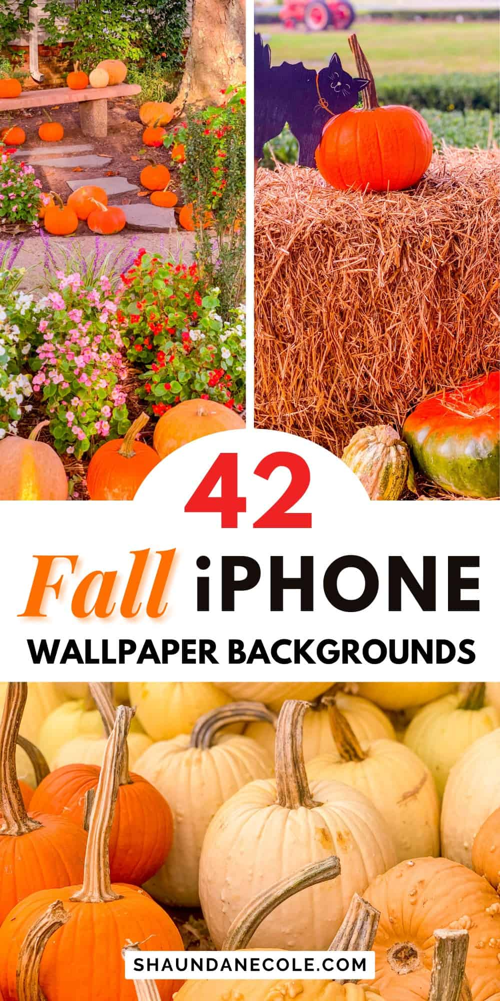 Fall Wallpaper iPhone Aesthetic Cute, Simple, Neutral
