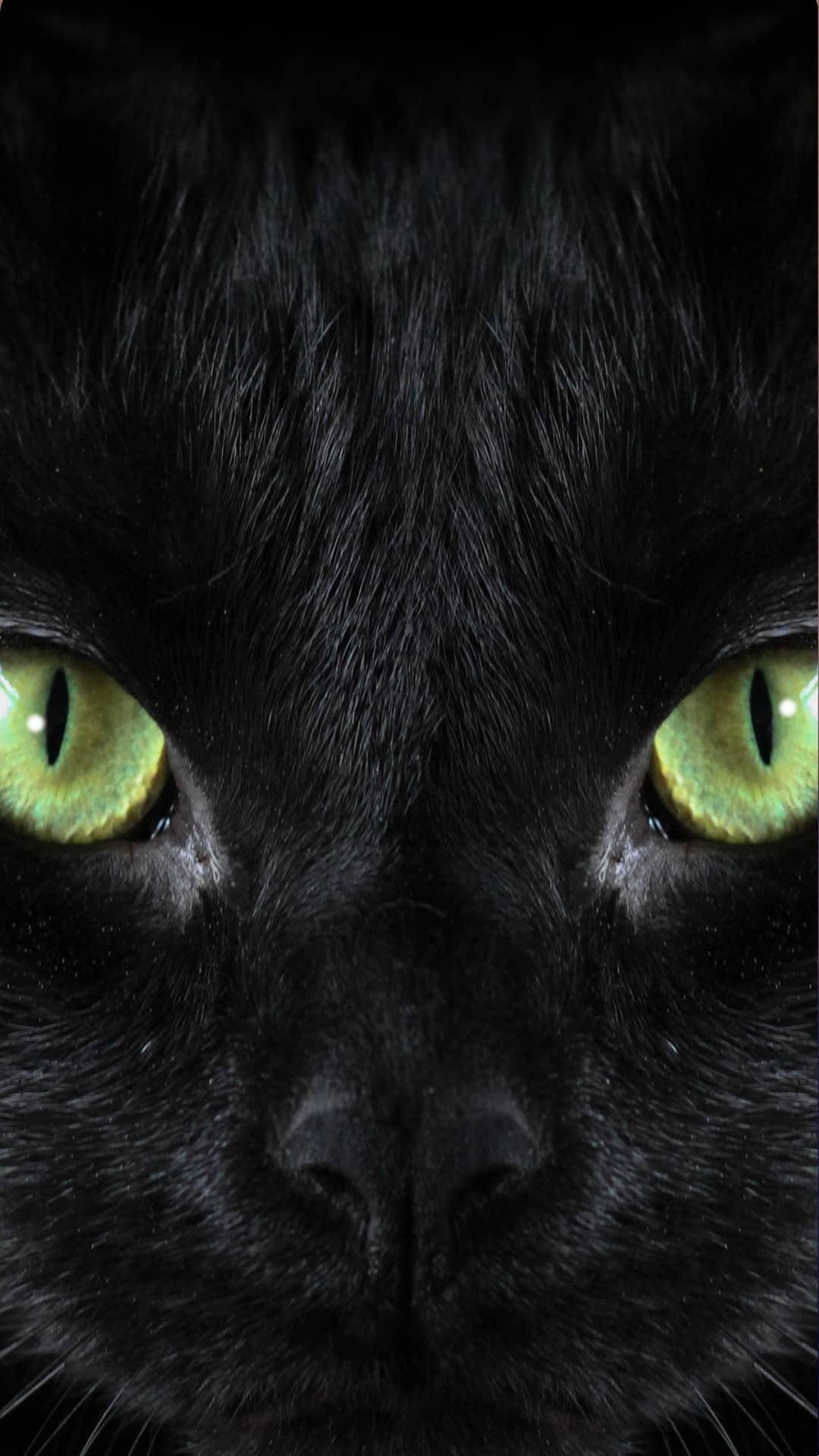 Free Black Cat Wallpaper iPhone Aesthetic