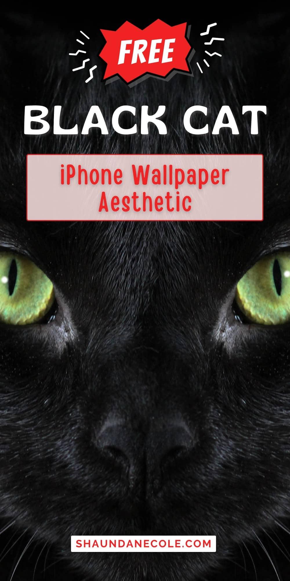 Free Black Cats Wallpaper iPhone Aesthetic Pinterest Pins