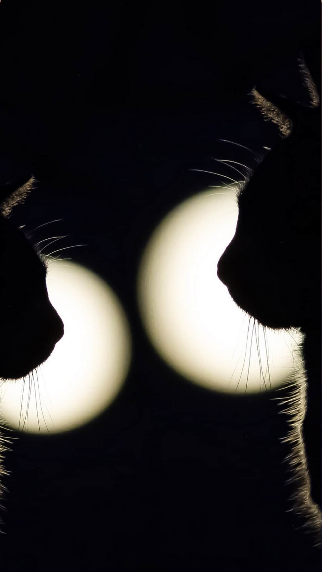 Black Cats Wallpaper iPhone Aesthetic Zoom Background