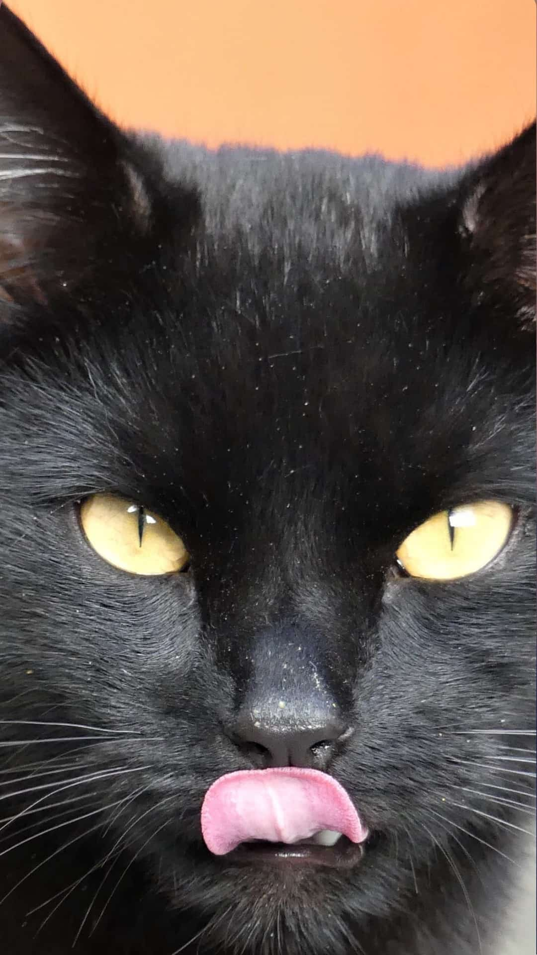 Free Black Cats Wallpaper iPhone Aesthetic